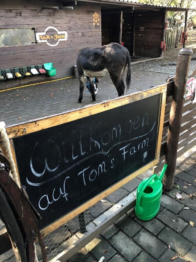 """Ein dunkelbrauner Esel steht vor einem Schuppen, auf dem Tom's Farm steht. Der Esel steht abgewandt zur Kamera und hat den Kopf zu Boden gesenkt. Im Vordergrund ist ein Zaun mit Schild """"Willkommen auf Toms Farm"""". Der Boden ist gepflastert."""