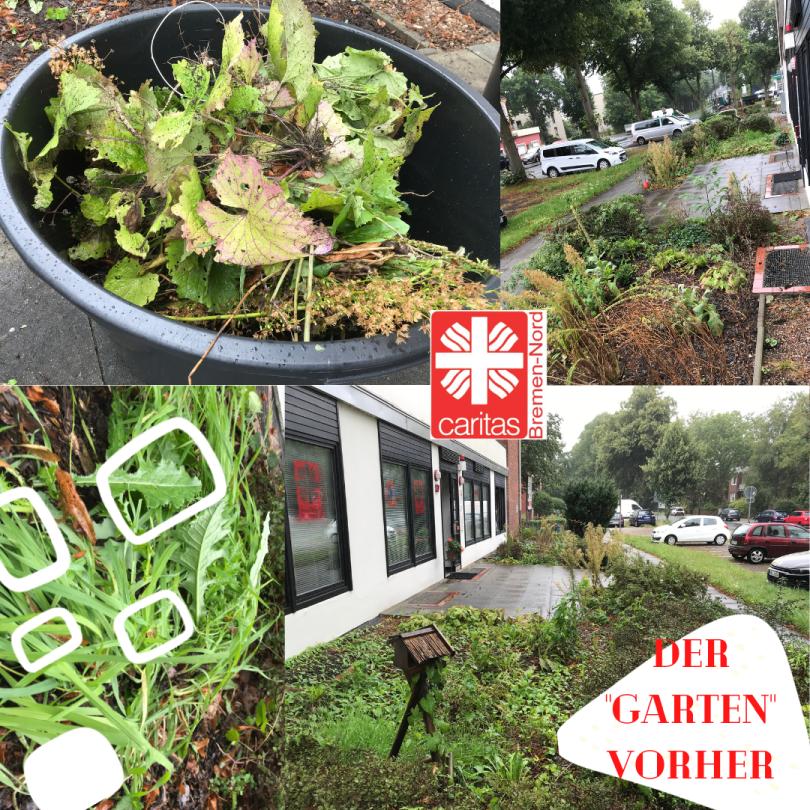 Collage mit Fotos von Pflanzen. Darüber geschrieben: Der Garten vorher
