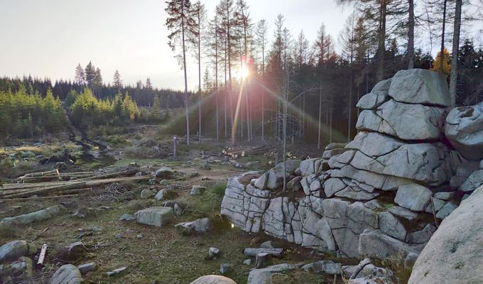 Eine Lichtung im Harz. Um die Lichtung stehen Tannen. Die Sonne steht hinter den Bäumen und blendet. Im Vordergrund ist ein Felsen
